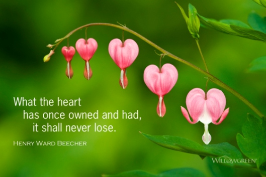 shall-never-lose